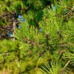 Pine Valley Tree Service Instagram