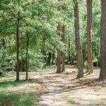 Camp Pine Valley Meansville Ga