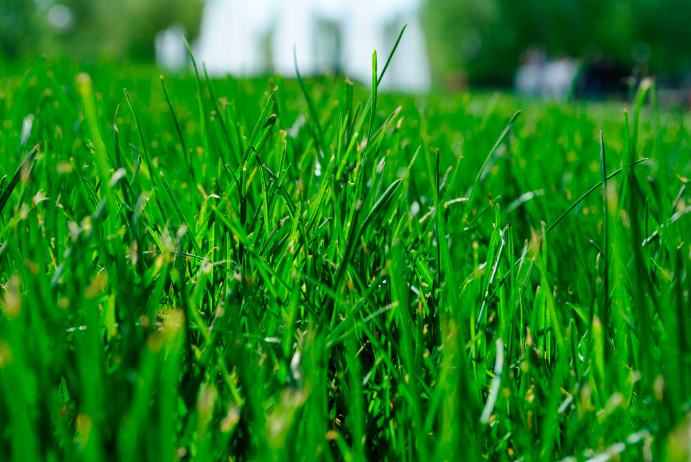 Lawn Care Services In North Carolina   Pine Valley Turf