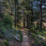 29011 Laguna Trl Pine Valley Ca