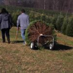 Pine Valley Christmas Trees Maryland