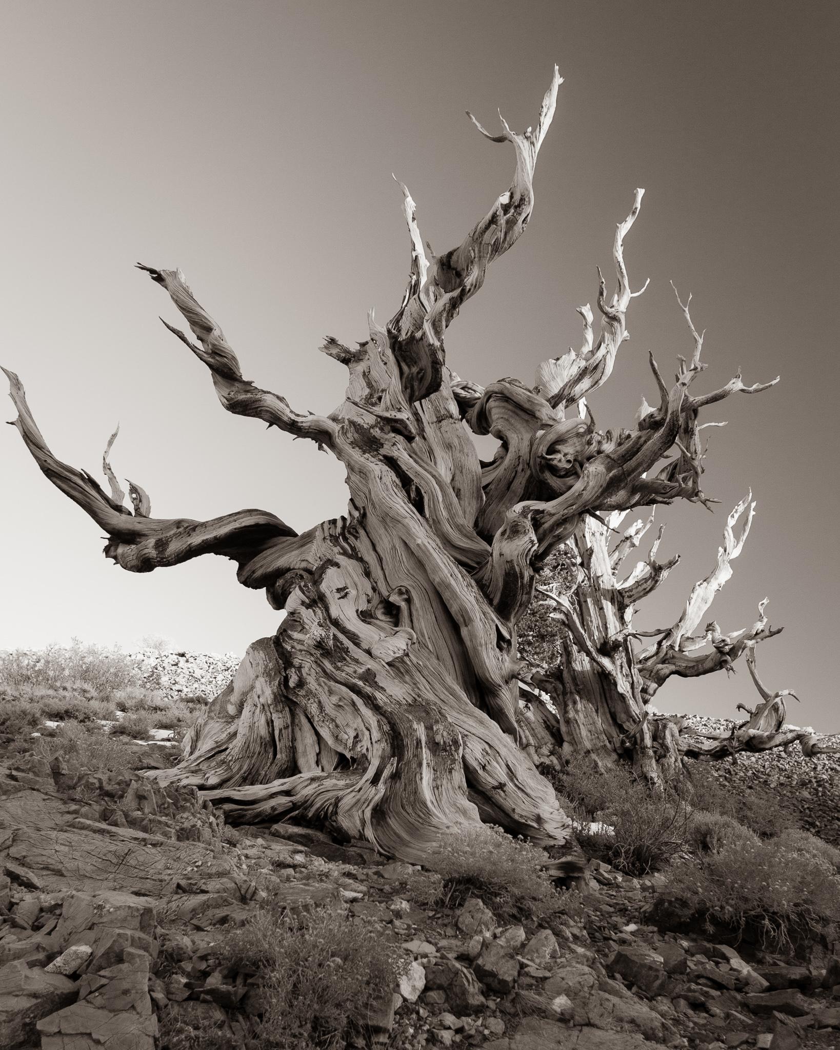 Death Valley to Bristlecone Pine Forest, California - Mark ...