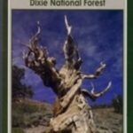 Dixie Nationsl Foesrt Pine Valley Utah Day Canps