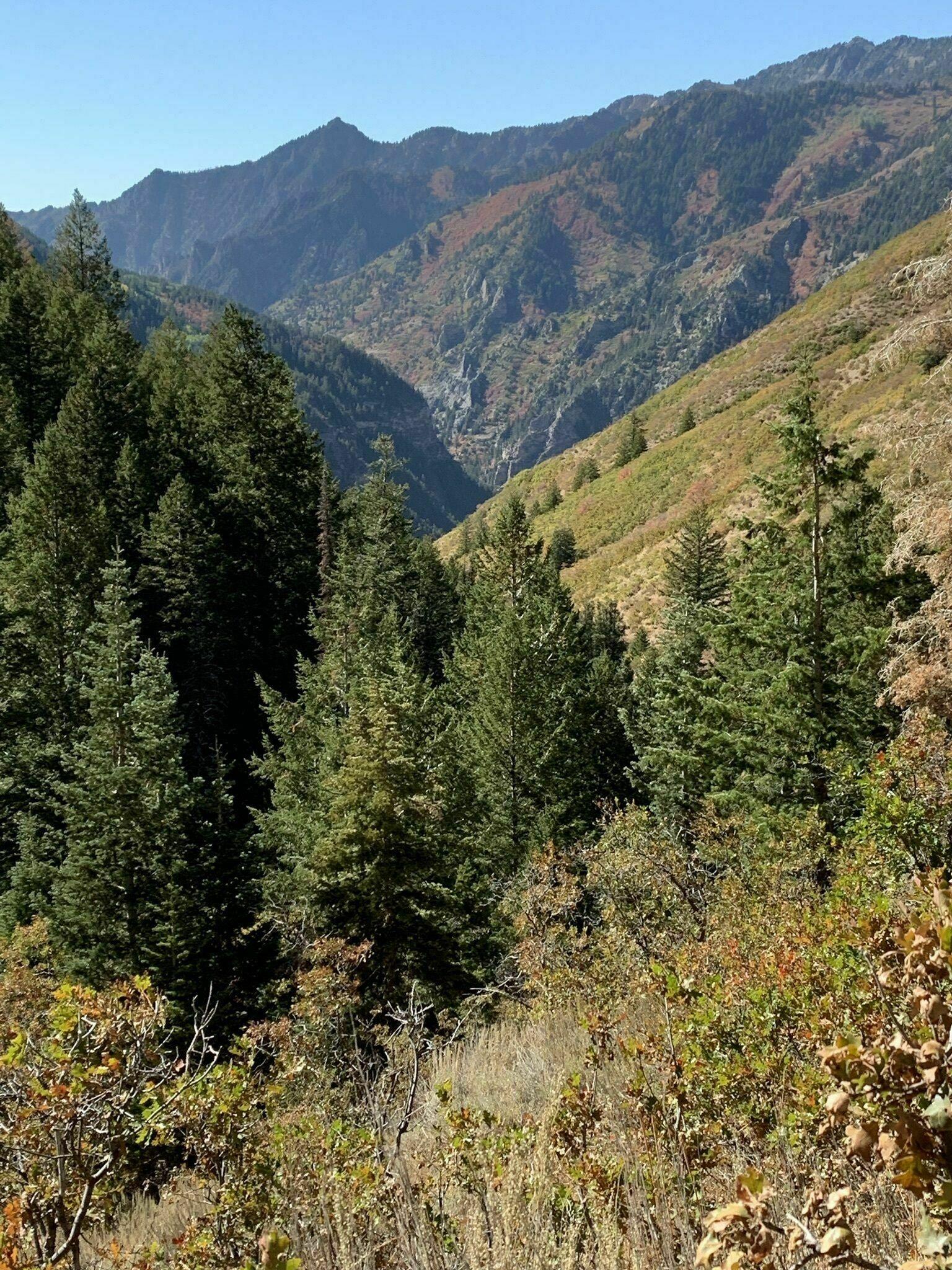 Pine Hollow Trail - Utah   AllTrails