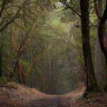 Corta Madera Road Pine Valley Ca