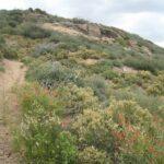 Noble Canyon Pine Valley California