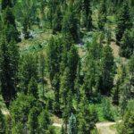 Pine Valley North Wasatch Cache Group Campground Site B