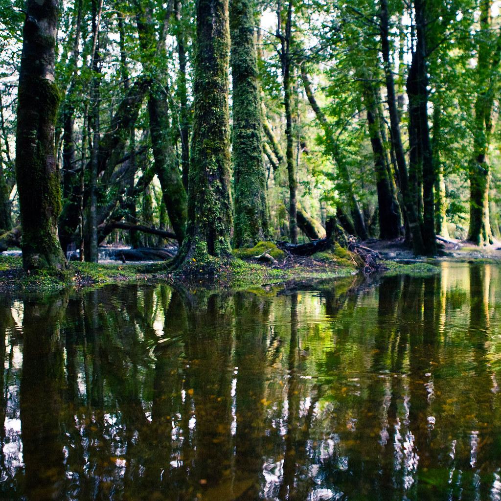 Pine Valley Track, Lake St Clair National Park | Tastrails ...