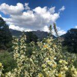 Pine Valley Utah Cabins Rentals