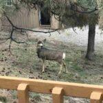Pine Valley Rentals Pagosa Springs