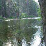 Upper Pines Campground Yosemite Valley Ca 95389