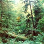 Virgin River Valley & Bristlecone Pine Overlook Altitude