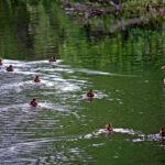 Koa Campground Quechee Pine Valley