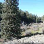 Pine Valley Rental Pagosa