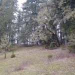 Stand Mapping Parent Tree Willamette Valley Ponderosa Pine