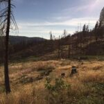 6740 Spring Valley Rd Pollock Pines Ca