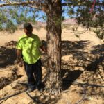 Drought Resistant And Snow Resistant Plants For Pine Valley Ca