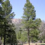 Pine Valley Mountain Wilderness Area