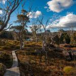 Pine Valley Hut To Narcissus Hut Distance