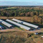 Pine Valley Turkey Farm