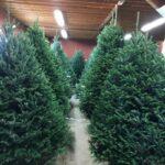 Pine Valley Christmas Tree Farm Sykesville