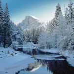 Pine Forest In The Snow Yosemite Valley Christies