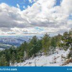 Stardew Valley Pine Tree Winter