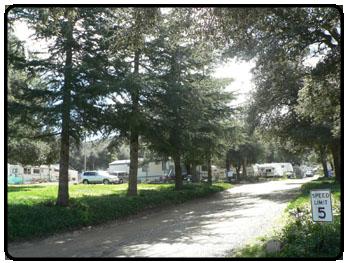 Pine Valley Trailer Park