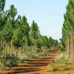 Pine Tree Valley Tree Farm
