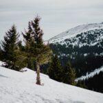 Pine Valley Mountain Snow