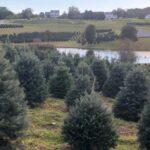 Pine Valley Christmas Tree Farm Ny