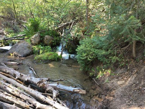 Best trails in Pine Valley, Utah   AllTrails