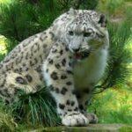 Pin Valley National Park Wildlife