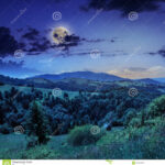 Pine Forest In Valley At Night
