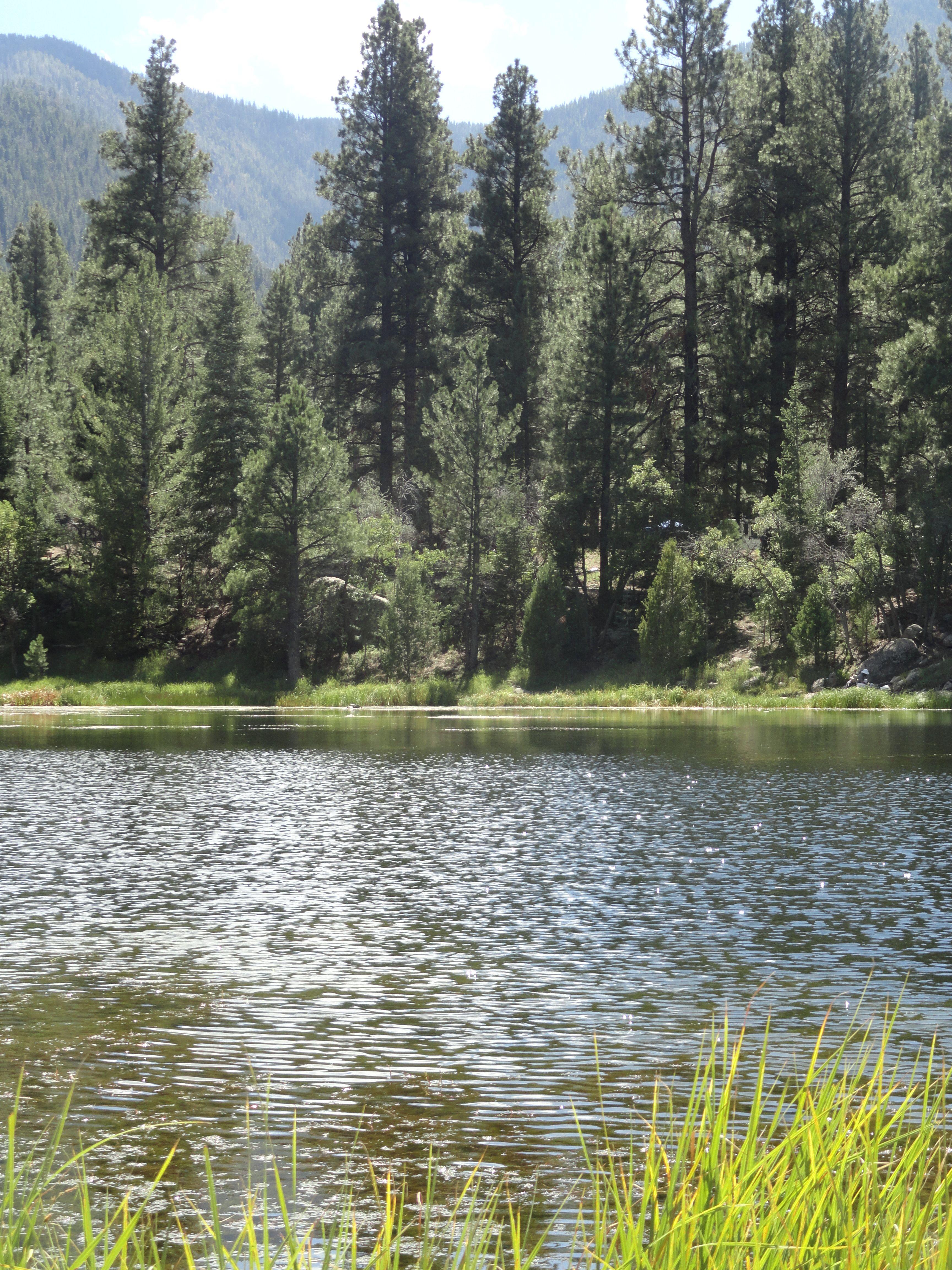 Pine Valley, Utah | Utah camping, Pine valley utah, Pine ...