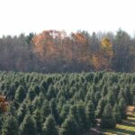 Pine Valley Farms Maryland