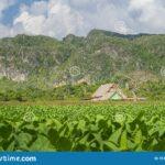 Vinales Valley National Park Vinales Pinar Del Rio Cuba