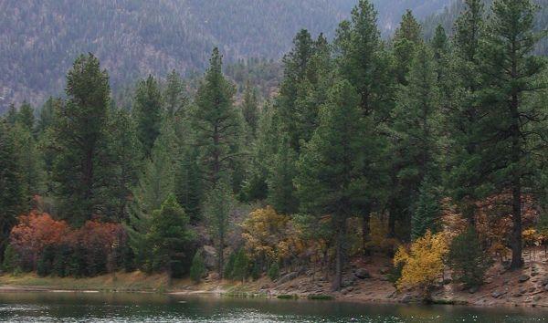 Pine Valley Utah | Pine valley utah, Utah, Pine valley