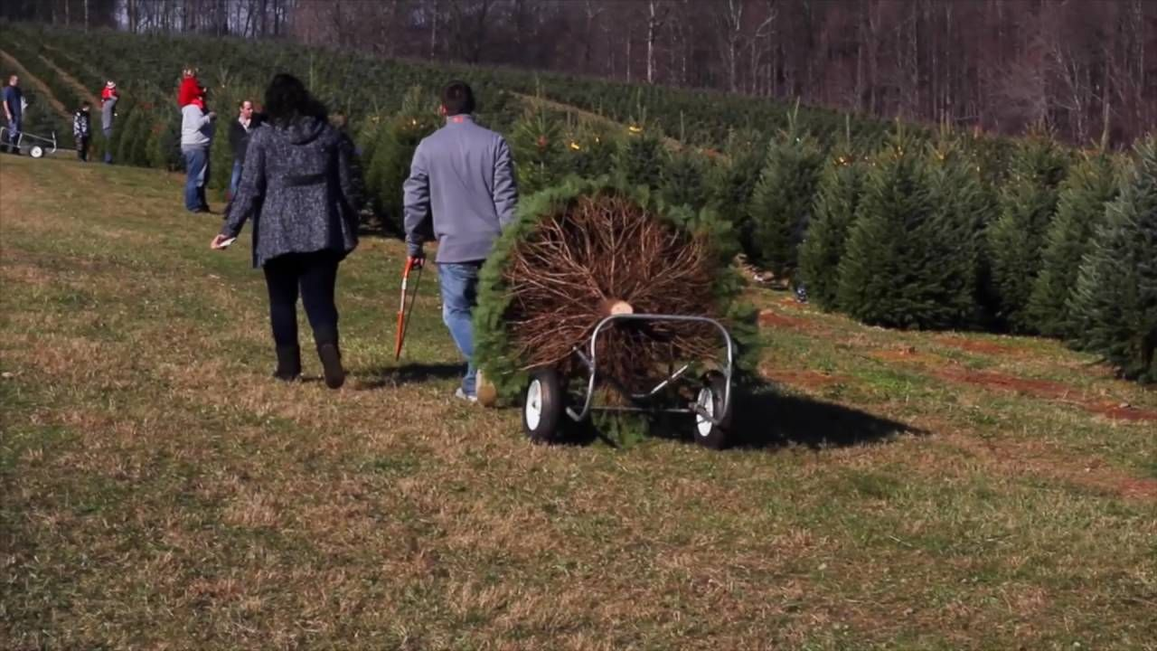 Christmas Tree Selling season at Pine Valley Farms in ...