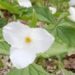Pine Valley Florist Woodbridge On
