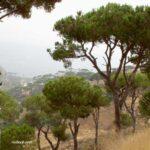 Pine Valley Lebanon