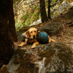 Backpacking Pine Valley Wilderness