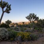 Pine Tree Rv Park To Yucca Valley