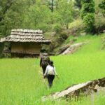 Pin Valley National Park In Himachal Pradesh Is Famous For