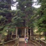 Hidden Valley Ranch Pine Colorado