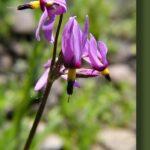 Pine Valley Wild Flowers