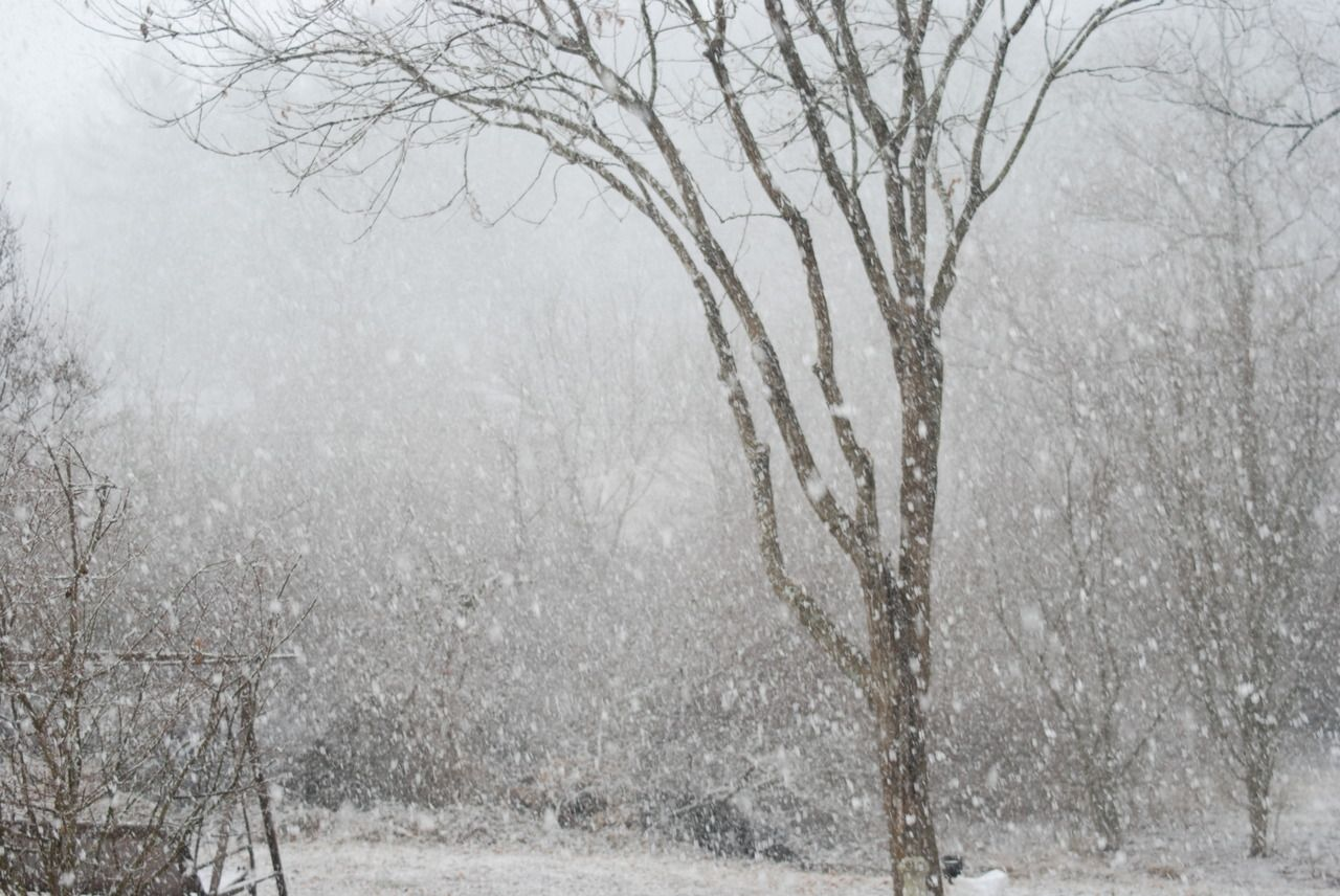 Asheville News, Weather, Sports, Breaking News   Forest ...