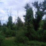 29120 Rocky Pass Way Pine Valley Ca 91962