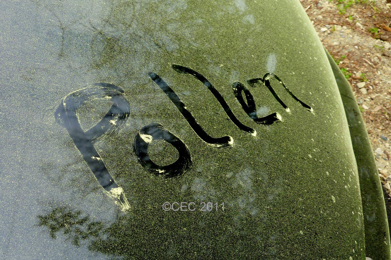 Gardener's Roost: Wordless Wednesday - Pollen assault