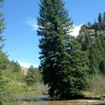 Pine Valley Hiking Trails